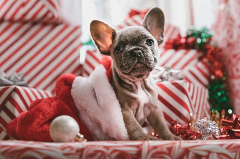 Cute looking Christma dog